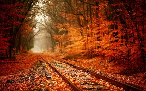 彩りも鮮やかな秋の紅葉をテーマにした壁紙素材が配布されています『 14 Colorful Autumn Wallpapers 』3