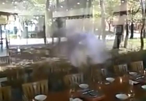 ガラスにぶつかって気を失っていたフクロウを優しく揺り起こす動画1