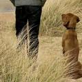 犬のいる風景と犬のいない風景を巧みに対比した、ペディグリーのシンプルなポスター広告