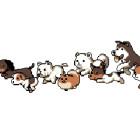 【GIF動画】とても可愛い、走る~走る~犬のGIFアニメ♪