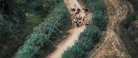 全てがミニチュアサイズに見えて、とても可愛い!ポルトガルののどかな風景をチルトシフトで撮影した映像『 The Village 』2