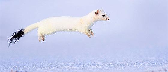 自然の中に暮らす動物の一瞬を切り取った鮮烈な写真の数々。野生動物写真家が競うコンペ『 Wildlife Photographer of the Year 』の受賞作品が素晴らしい