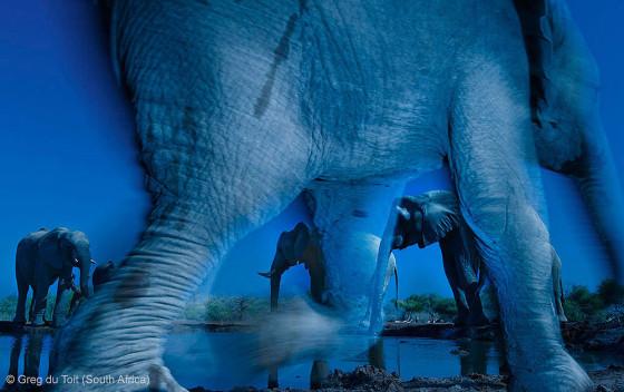自然の中に暮らす動物の一瞬を切り取った鮮烈な写真の数々。野生動物写真家が競うコンペ『 Wildlife Photographer of the Year 』の受賞作品が素晴らしい1