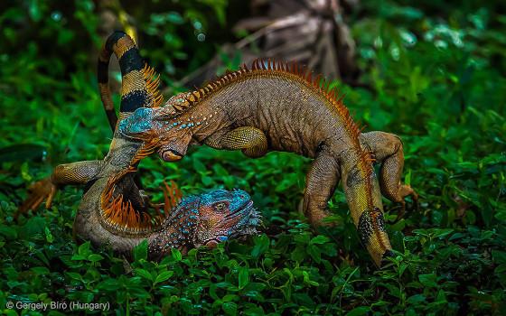 自然の中に暮らす動物の一瞬を切り取った鮮烈な写真の数々。野生動物写真家が競うコンペ『 Wildlife Photographer of the Year 』の受賞作品が素晴らしい10