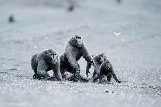 自然の中に暮らす動物の一瞬を切り取った鮮烈な写真の数々。野生動物写真家が競うコンペ『 Wildlife Photographer of the Year 』の受賞作品が素晴らしい11
