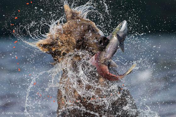 自然の中に暮らす動物の一瞬を切り取った鮮烈な写真の数々。野生動物写真家が競うコンペ『 Wildlife Photographer of the Year 』の受賞作品が素晴らしい12
