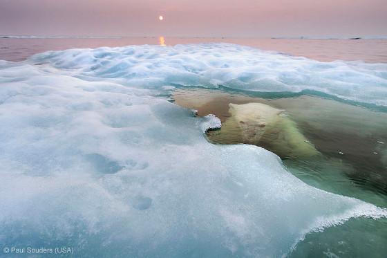 自然の中に暮らす動物の一瞬を切り取った鮮烈な写真の数々。野生動物写真家が競うコンペ『 Wildlife Photographer of the Year 』の受賞作品が素晴らしい13
