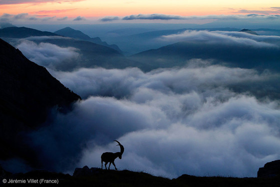 自然の中に暮らす動物の一瞬を切り取った鮮烈な写真の数々。野生動物写真家が競うコンペ『 Wildlife Photographer of the Year 』の受賞作品が素晴らしい14