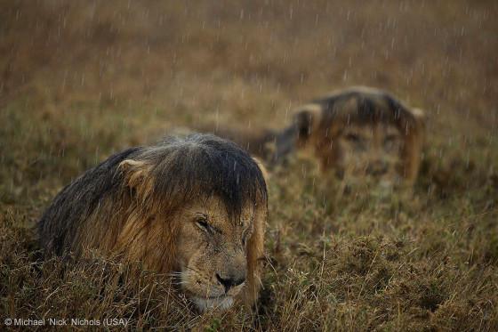 自然の中に暮らす動物の一瞬を切り取った鮮烈な写真の数々。野生動物写真家が競うコンペ『 Wildlife Photographer of the Year 』の受賞作品が素晴らしい15