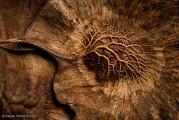 自然の中に暮らす動物の一瞬を切り取った鮮烈な写真の数々。野生動物写真家が競うコンペ『 Wildlife Photographer of the Year 』の受賞作品が素晴らしい17