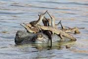 自然の中に暮らす動物の一瞬を切り取った鮮烈な写真の数々。野生動物写真家が競うコンペ『 Wildlife Photographer of the Year 』の受賞作品が素晴らしい2