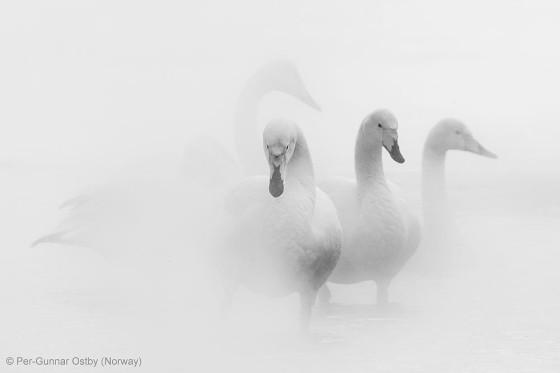 自然の中に暮らす動物の一瞬を切り取った鮮烈な写真の数々。野生動物写真家が競うコンペ『 Wildlife Photographer of the Year 』の受賞作品が素晴らしい22