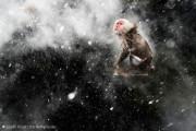 自然の中に暮らす動物の一瞬を切り取った鮮烈な写真の数々。野生動物写真家が競うコンペ『 Wildlife Photographer of the Year 』の受賞作品が素晴らしい24