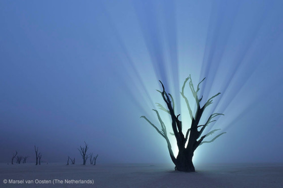 自然の中に暮らす動物の一瞬を切り取った鮮烈な写真の数々。野生動物写真家が競うコンペ『 Wildlife Photographer of the Year 』の受賞作品が素晴らしい25