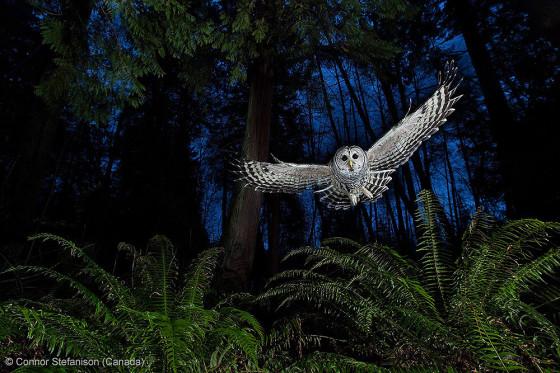 自然の中に暮らす動物の一瞬を切り取った鮮烈な写真の数々。野生動物写真家が競うコンペ『 Wildlife Photographer of the Year 』の受賞作品が素晴らしい26