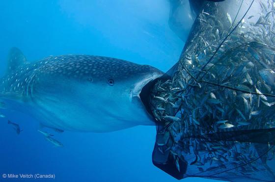 自然の中に暮らす動物の一瞬を切り取った鮮烈な写真の数々。野生動物写真家が競うコンペ『 Wildlife Photographer of the Year 』の受賞作品が素晴らしい28