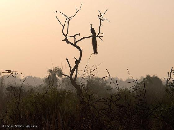 自然の中に暮らす動物の一瞬を切り取った鮮烈な写真の数々。野生動物写真家が競うコンペ『 Wildlife Photographer of the Year 』の受賞作品が素晴らしい30