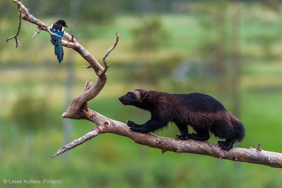 自然の中に暮らす動物の一瞬を切り取った鮮烈な写真の数々。野生動物写真家が競うコンペ『 Wildlife Photographer of the Year 』の受賞作品が素晴らしい31
