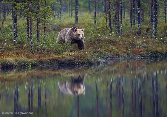 自然の中に暮らす動物の一瞬を切り取った鮮烈な写真の数々。野生動物写真家が競うコンペ『 Wildlife Photographer of the Year 』の受賞作品が素晴らしい32