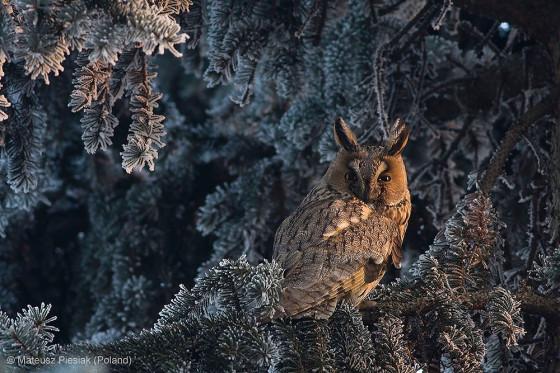自然の中に暮らす動物の一瞬を切り取った鮮烈な写真の数々。野生動物写真家が競うコンペ『 Wildlife Photographer of the Year 』の受賞作品が素晴らしい33