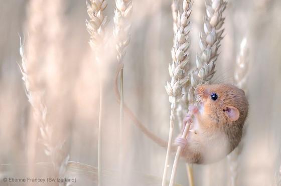 自然の中に暮らす動物の一瞬を切り取った鮮烈な写真の数々。野生動物写真家が競うコンペ『 Wildlife Photographer of the Year 』の受賞作品が素晴らしい34