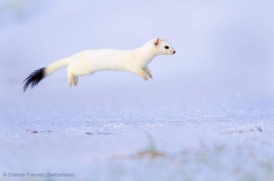自然の中に暮らす動物の一瞬を切り取った鮮烈な写真の数々。野生動物写真家が競うコンペ『 Wildlife Photographer of the Year 』の受賞作品が素晴らしい35