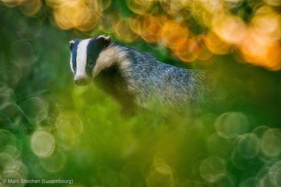 自然の中に暮らす動物の一瞬を切り取った鮮烈な写真の数々。野生動物写真家が競うコンペ『 Wildlife Photographer of the Year 』の受賞作品が素晴らしい4