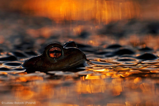 自然の中に暮らす動物の一瞬を切り取った鮮烈な写真の数々。野生動物写真家が競うコンペ『 Wildlife Photographer of the Year 』の受賞作品が素晴らしい5