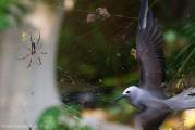 自然の中に暮らす動物の一瞬を切り取った鮮烈な写真の数々。野生動物写真家が競うコンペ『 Wildlife Photographer of the Year 』の受賞作品が素晴らしい6