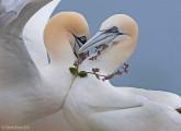 自然の中に暮らす動物の一瞬を切り取った鮮烈な写真の数々。野生動物写真家が競うコンペ『 Wildlife Photographer of the Year 』の受賞作品が素晴らしい7
