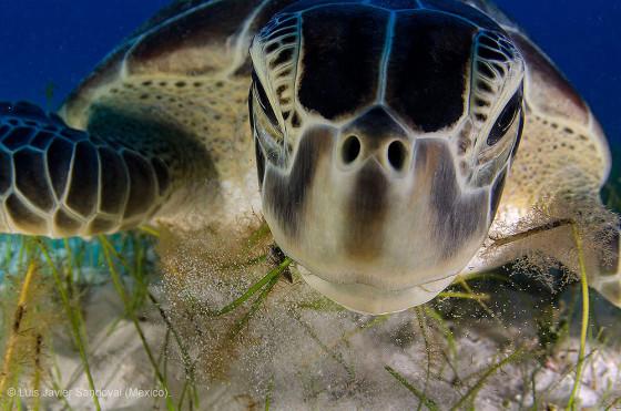 自然の中に暮らす動物の一瞬を切り取った鮮烈な写真の数々。野生動物写真家が競うコンペ『 Wildlife Photographer of the Year 』の受賞作品が素晴らしい8