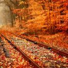【素材】彩りも鮮やかな秋の紅葉をテーマにした壁紙素材が配布されています『 14 Colorful Autumn Wallpapers 』