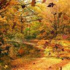 【素材】深まる秋にぴったりな、色鮮やかな紅葉の美しいデスクトップ壁紙素材『 29 Autumn Wallpapers For Your Desktop 』