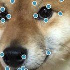【オススメ】ホント誰?www ワンタップからでも顔写真を簡単にメイクアップできるアプリ『 Perfect365 』を使って、愛犬の写真を魔改造したメーキャップ写真が面白い!